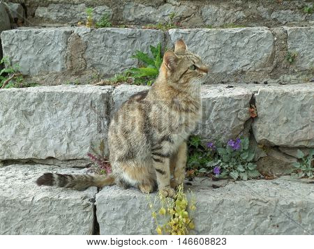 Portrait of a Cat sitting at the Staircase of the Archaeological Site of Delphi, Greece