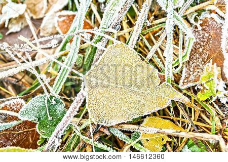 autumn yellow one leaf on the ground covered with frost.