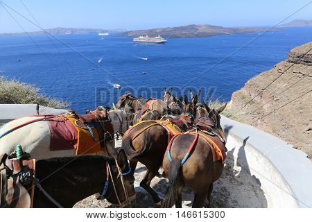 Donkeys on the climb from the harbor in FiraSantorini Greece