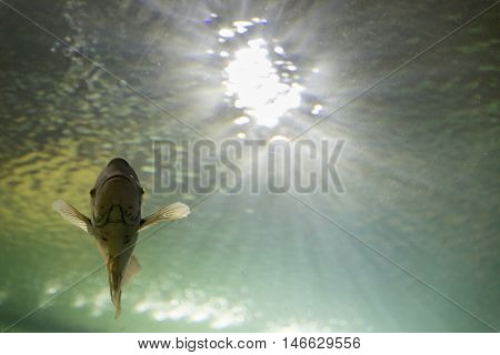 Fish Swimming In Tank Aquarium