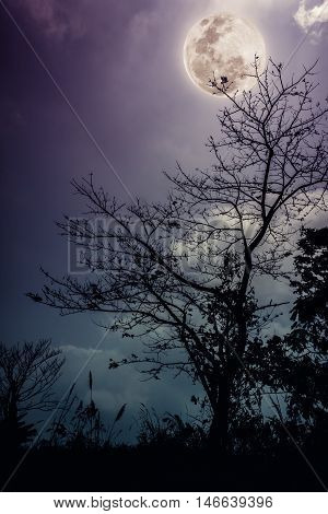 Silhouettes of dry tree against night sky and bright moon beautiful landscape with full moon in the night sky. Outdoors. The moon were NOT furnished by NASA.