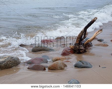 Baltic climates. Rozewie, Poland September 03, 2016 Snag ejected from the Baltic Sea and rocks on the coast in Rozewie.