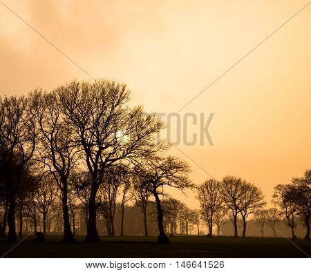 Yellow Sky In Rural Landscape During Foggy Afternoon Sunset