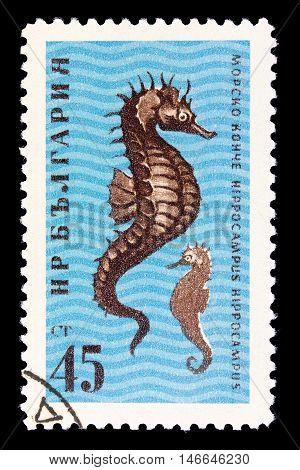Bulgaria - Circa 1961
