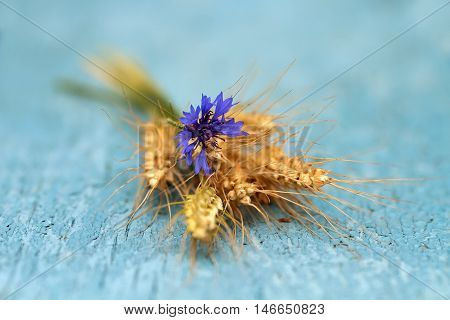 bouquet of ripe grass and cornflower on the old wooden table