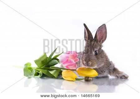 Little Rabbit And Flowers