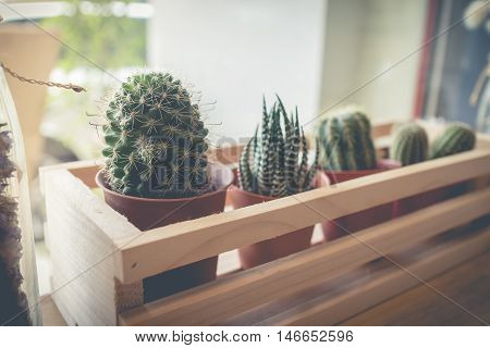 Little cactus plant in the flower pot. Various cactus plants. cactus plants in retro effect image.(selective focus )
