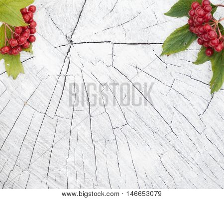 Autumn background with branches of red berries of a Guelder rose or Viburnum shrub on a white wooden background