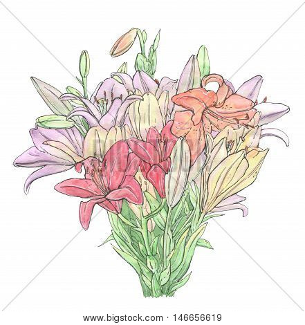 hand drawn set of watercolor flowers Lilium Lily Lilies on white background