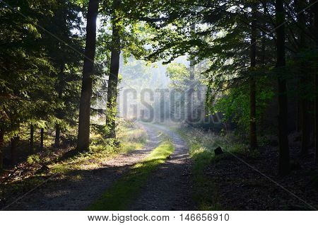 sunny forest road south Bohemia Czech Republic