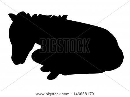 Foal Lying Silhouette on White Background. Isolated vector illustration animal theme.