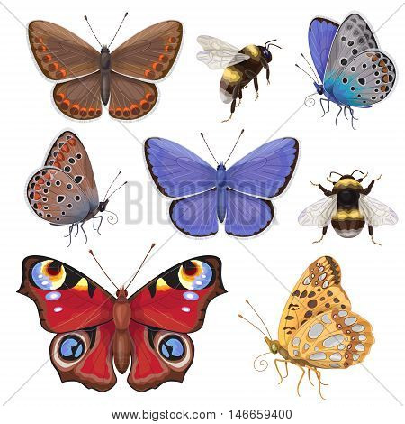 Set of butterflies and bumblebees isolated on white. Top and side view colorful insects.