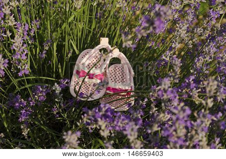 Lavender stems in a field with baby shoes.