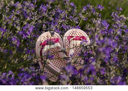 Pink baby girl shoes in lavender field