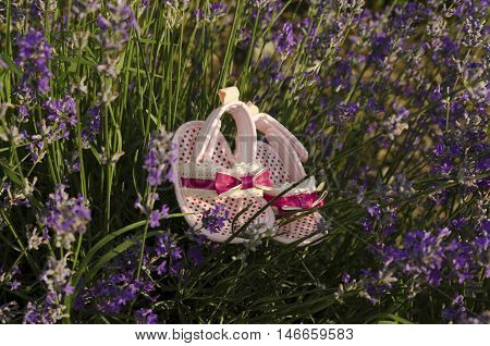 Sweet pink  baby shoes in lavender field