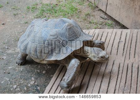 Turtle in action, Zoo Jihlava, Czech rep.