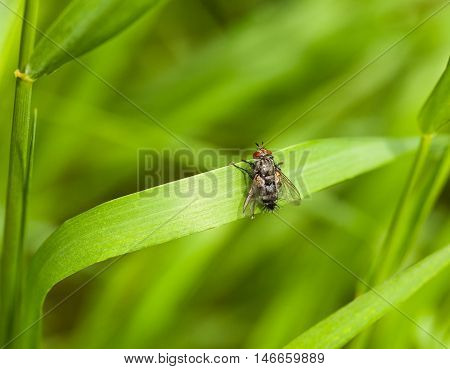 Fly Sitting On Grass Blade