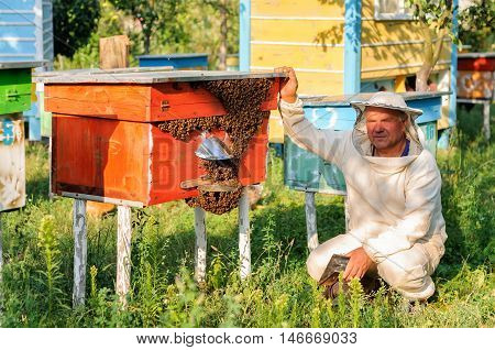beekeeper inspects the apiary hive of bees.