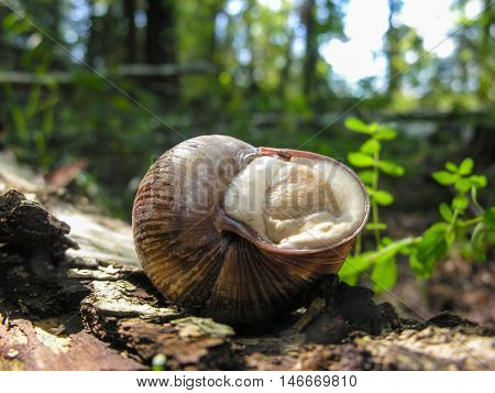 Snail hiding in a shell on a fallen tree trunk