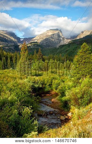 Lush summer green bushes and trees below Hallett peak in Rocky Mountain national park.