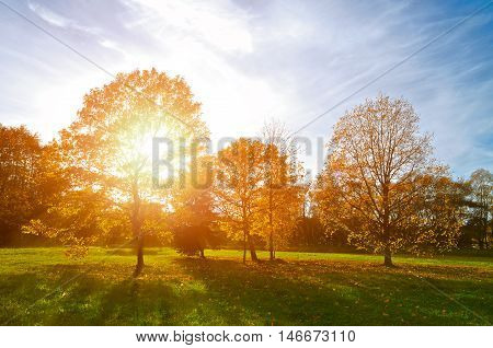 Colorful sunset autumn park. Autumn nature landscape-yellowed autumn park in autumn sunny weather. Picturesque autumn view of autumn park. Soft focus applied. Autumn nature in sunlight