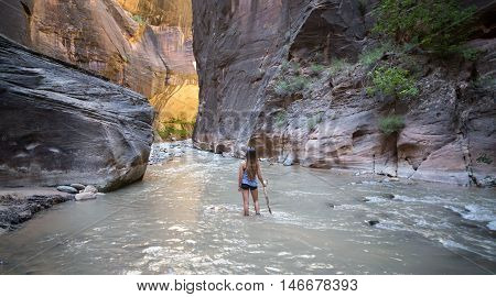 The Narrows of Virgin River, Zion National Park, Utah, USA. The Narrows is the most popular hike in Zion National Park, and one of the world's best slot canyon hikes.