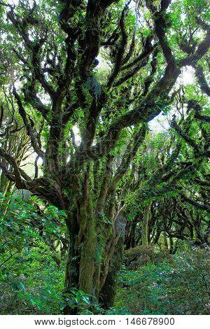 Rain Forest In Egmont National Park, New Zealand