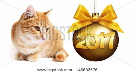 2017 text ginger cat with golden christmas ball whit ribbon bow on white background