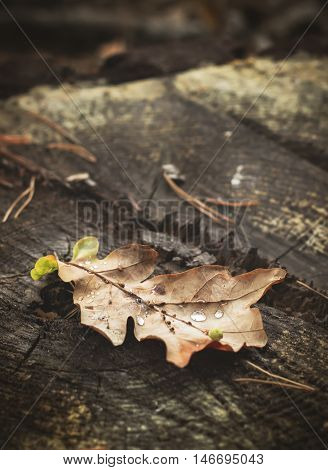 The fallen autumn leaf on a stub. Selective focus.
