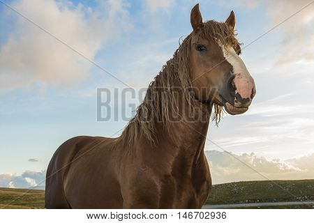 Beautiful brown stallion in pose under a cloudy sky