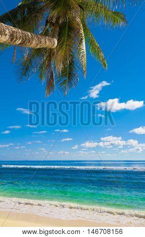 Leaves Palms Beach