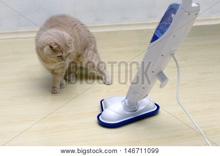 vacuum cleaner on the floor with a surprised cat