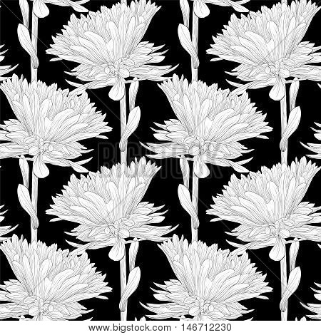 Beautiful monochrome black and white seamless background with flowers aster. Hand-drawn contour lines and strokes.