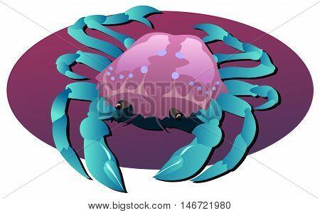 Blue legged crab illustration, Portunus rajungan, ten legged crustacean.