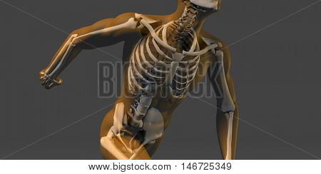 Human Body and Skeleton Anatomy Xray Concept 3D Illustration Render