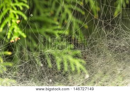 Large Spider Web In Autumn