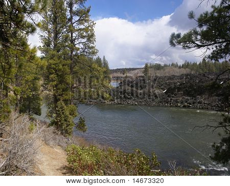 Panorama, Ponderosa Pines And River Canyon