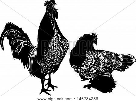 homemade agricultural bird rooster and chicken agriculture