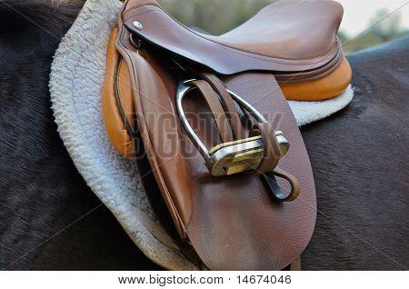 Horse with english saddle