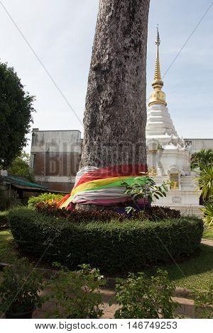 The sacred tree of Atsuta-jingu Shrine, in Thailand