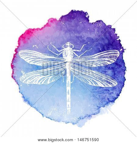 hand drawn dragonfly on bright watercolor background