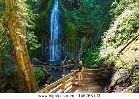 Waterfall in Olympic NP,USA