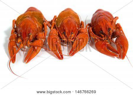 Macro three Boiled crayfish on isolate white background