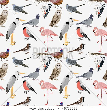 Realistic birds sealess patern. Barn Owl and Heron, Bullfinch and Pheasant, Woodpecker and Flamingo. Vector illustration