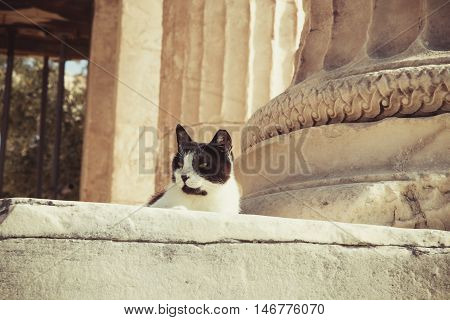 Stray Cat In Acropolis