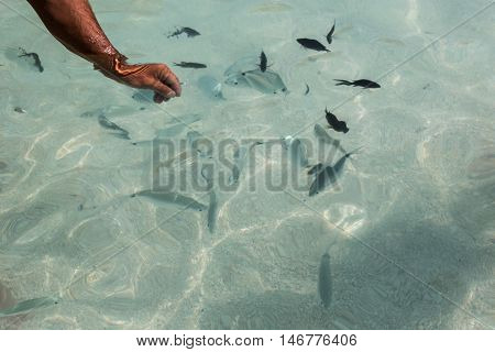 Catching Fishes in Transparent Sea with Bare Hands