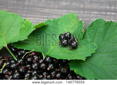 Fresh ripe black currants heap on rustic wood background. Natural organic berries with green leaves scattered on weathered grey wooden table, new berry harvest top view closeup