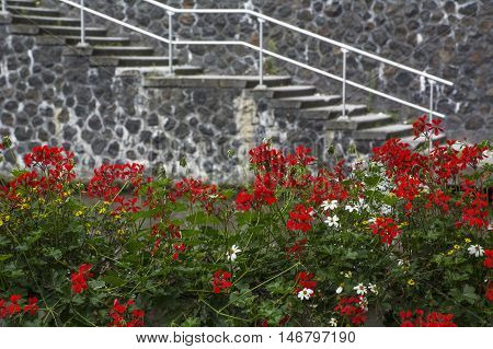 The stone stairway on the european street with red flowers