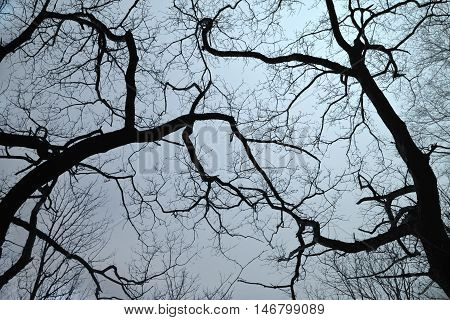 Silhouette of branches with blue night sky as a background