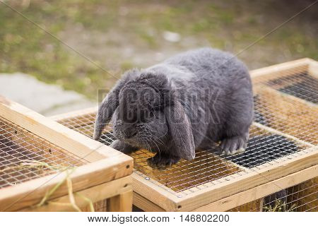 Rabbit in a Cage on the street